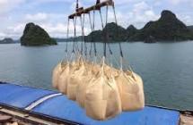 Xi măng Việt Nam xuất khẩu vào Philippines sẽ phải nộp thêm thuế nhập khẩu.